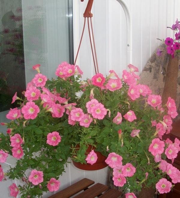 розовые-цветы2.jpg