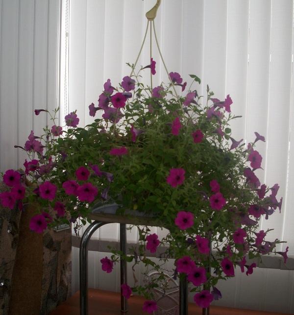 сиреневые-цветы.jpg