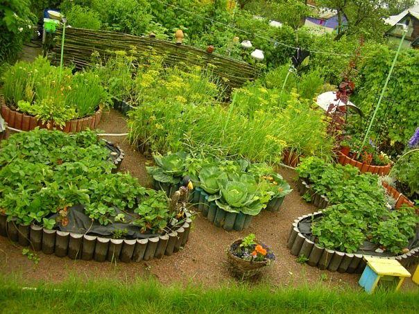 Сад огород записи в рубрике дача сад
