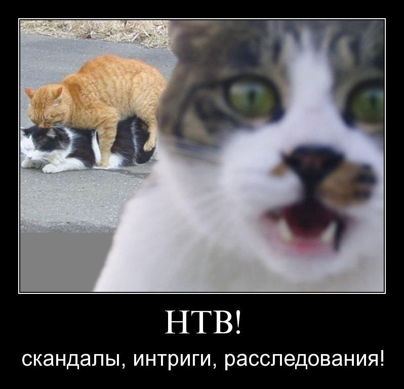 Ролики с ifly ru